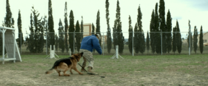 Megan Leavey (2016) Movie Review